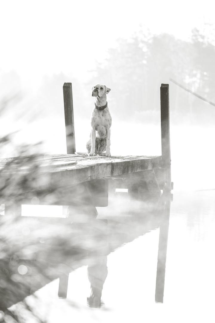 Wie wir Nebel lieben.