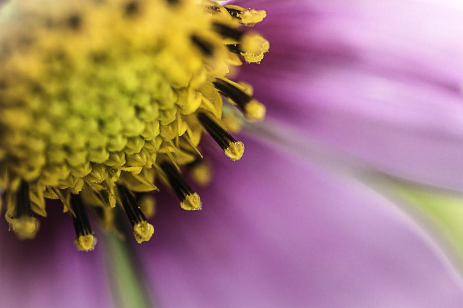 Wie wunderschön sind kleine Blumen