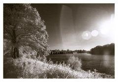 Wieder am Rhein