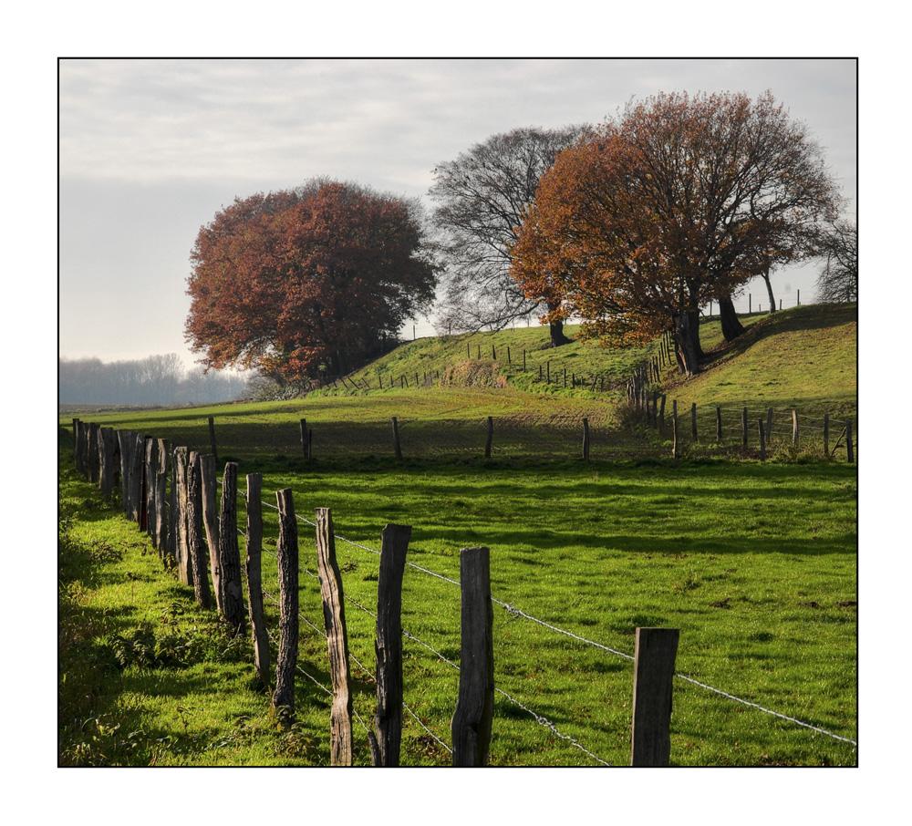 Wieder aufgestöbert: Herbstwiese