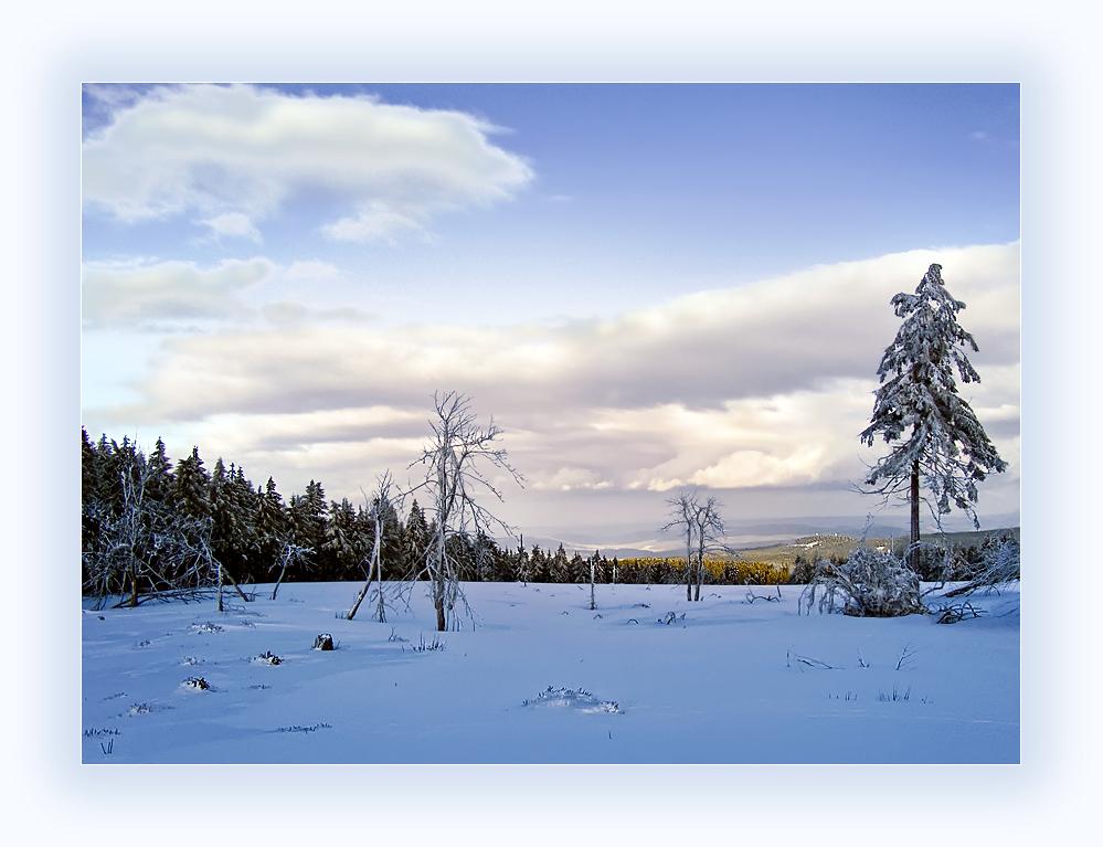Wieder im Schneekopfmoor unterwegs 2