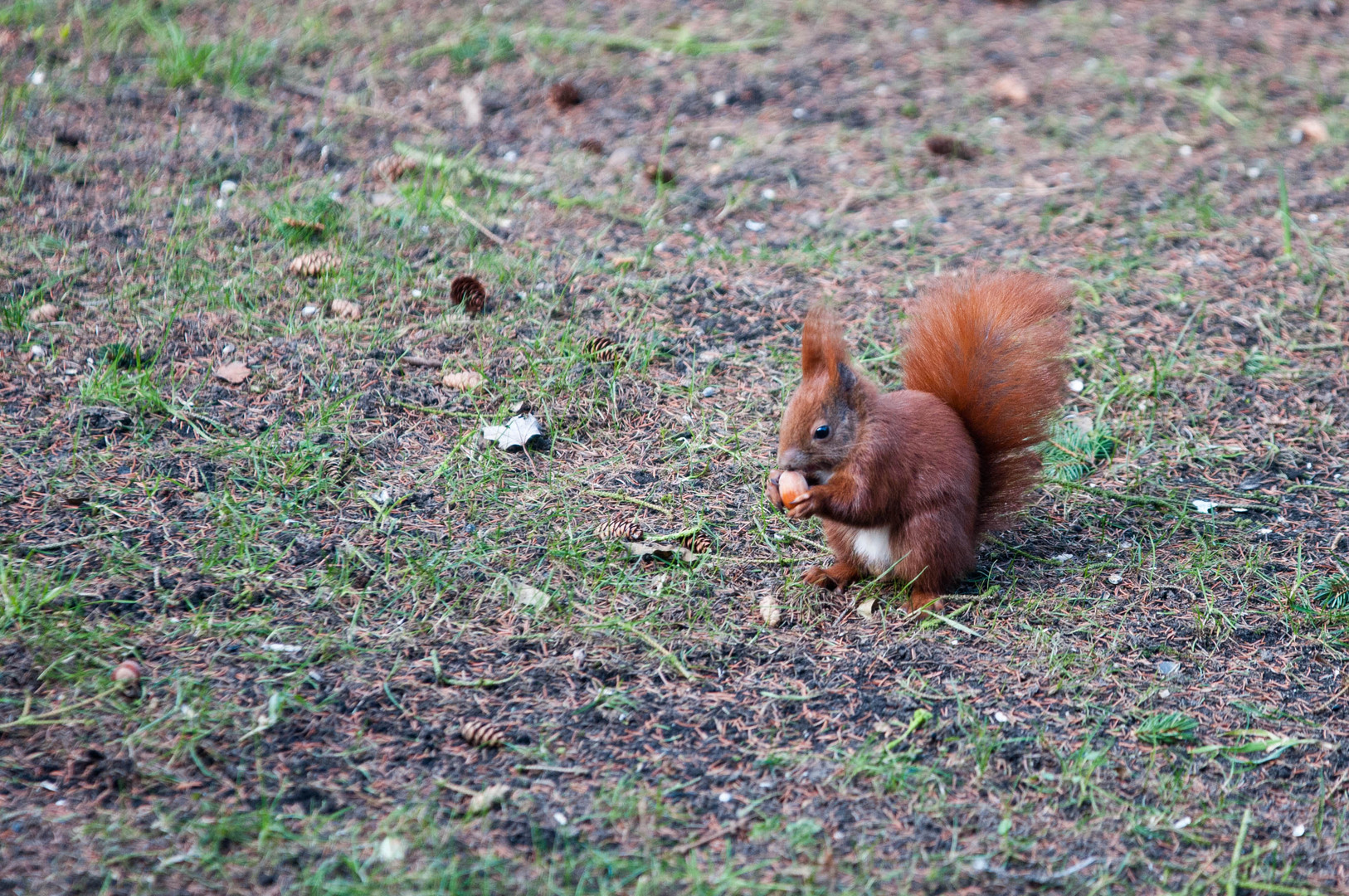 Wieder mal ein Eichhörnchen...