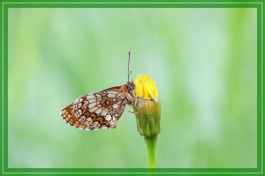 Wieder mal ein Schmetterling