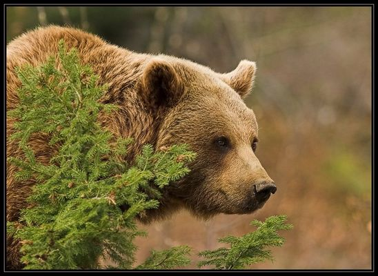 Wieder mal NP Bayerischer Wald