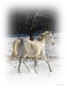Wieder mein Lieblingspferd Amun