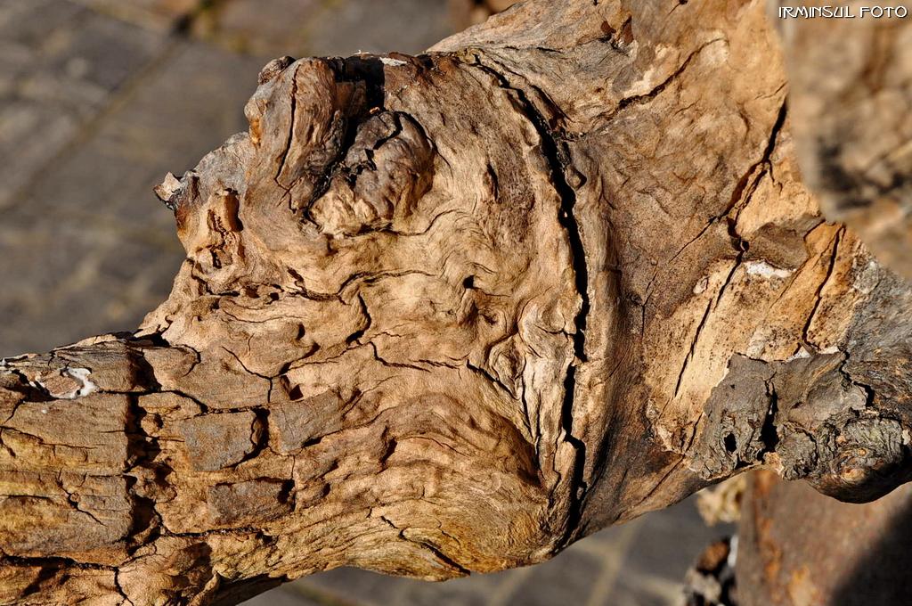 Wieder so ein Holz - diesmal am Gartengeist