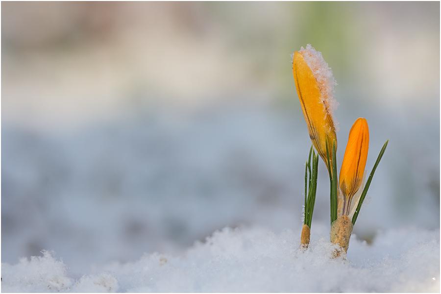 wieder winter....