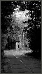 Wieder Zeit für den Wald