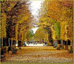 Wiener Herbst ( 2 )
