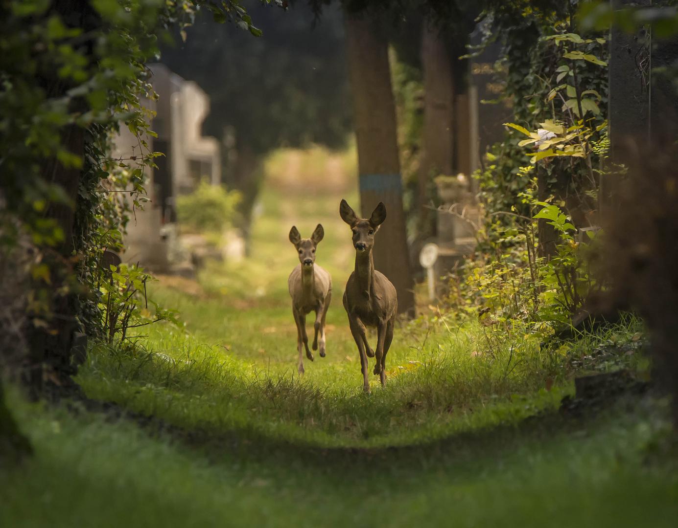 wiens zentralfriedhof ist heimat f r viele tiere foto bild natur landschaft tiere bilder. Black Bedroom Furniture Sets. Home Design Ideas