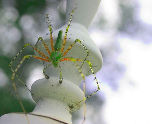 Wierd Spider
