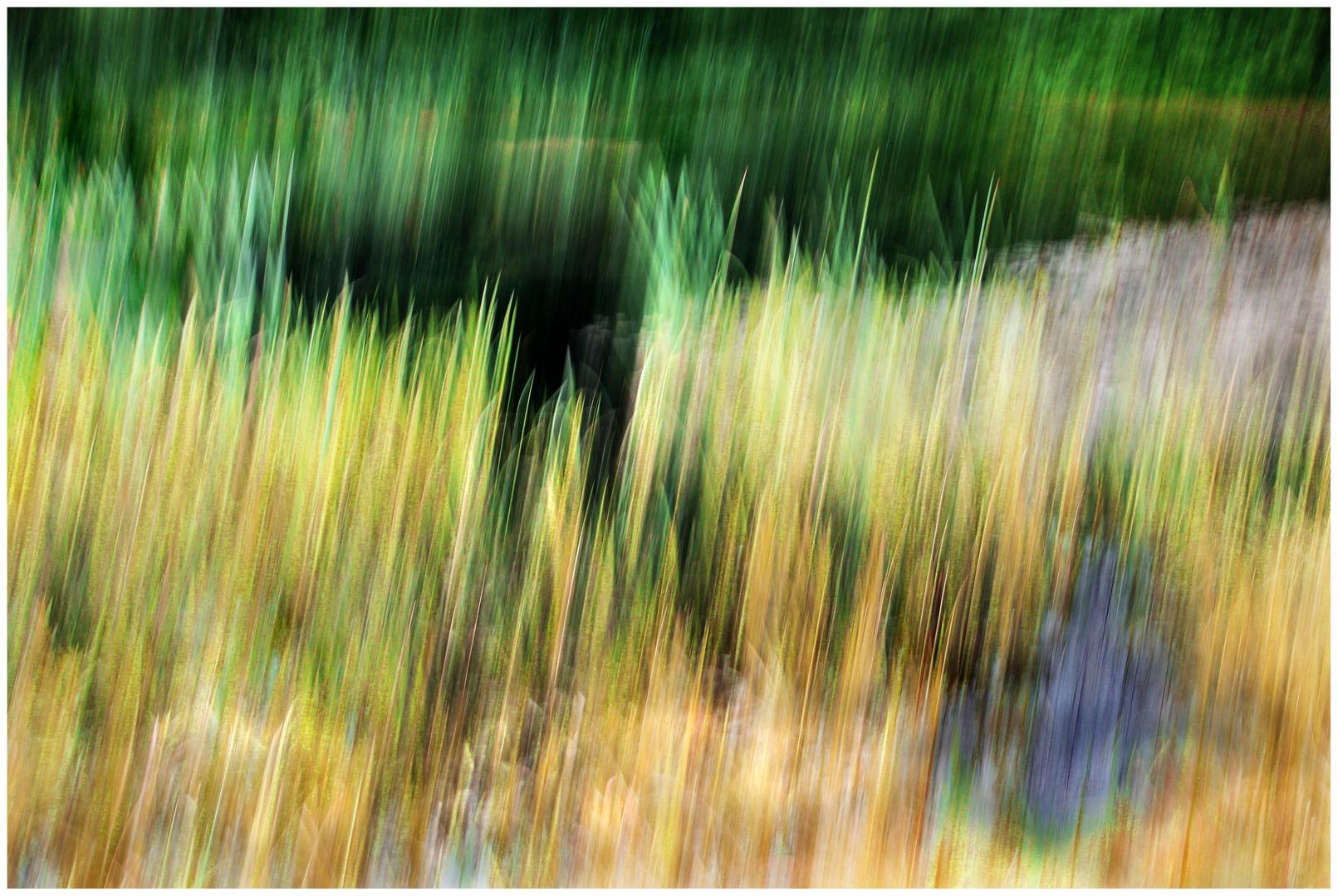 Wiese am Teich