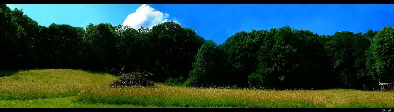 Wiese am Wald Panorama