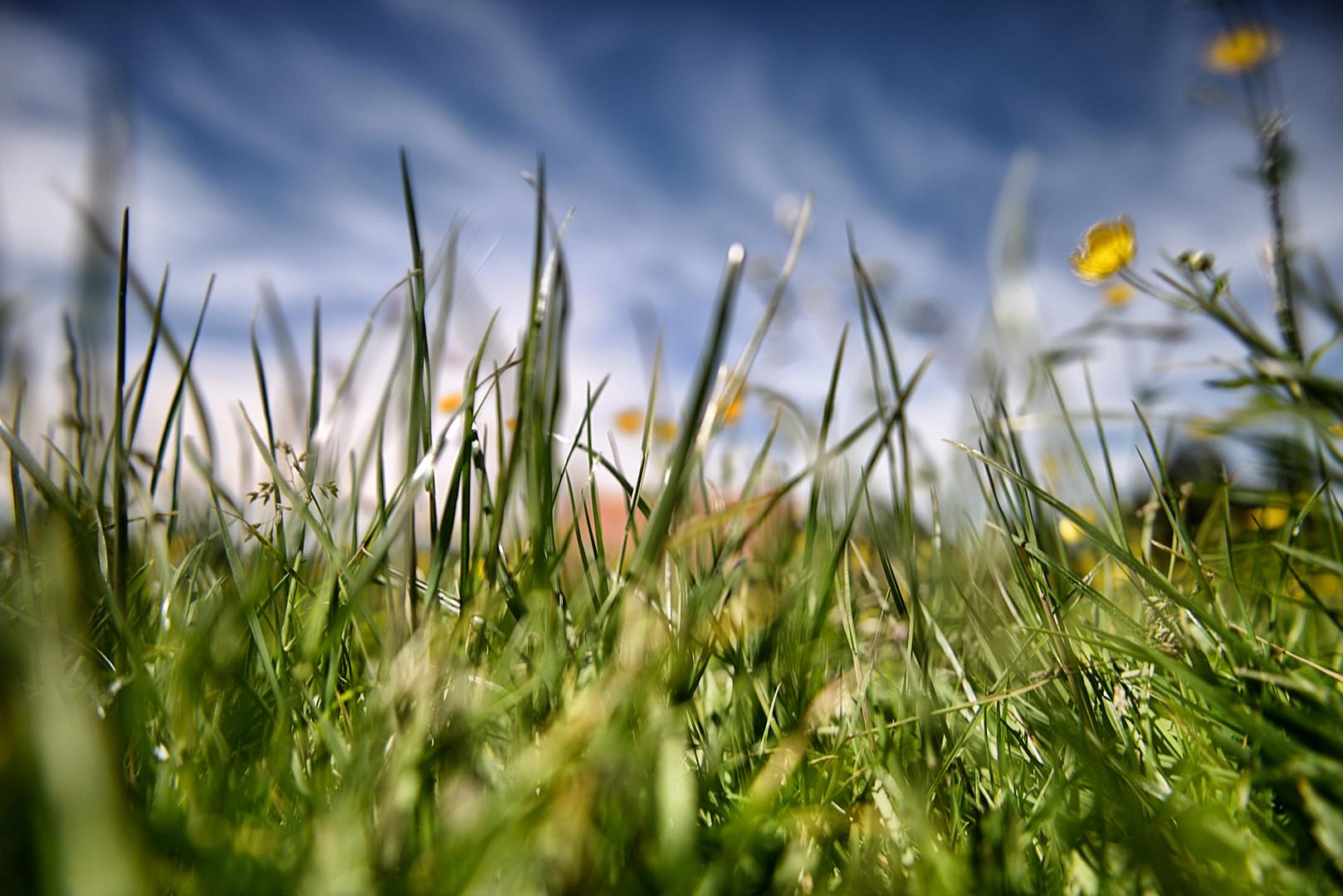 Wiese, Blumen und Himmel