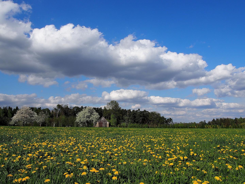 Wiese im Frühling