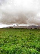 Wiese vorm Chimborazo