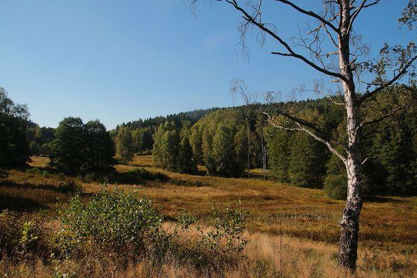 Wiese & Wald