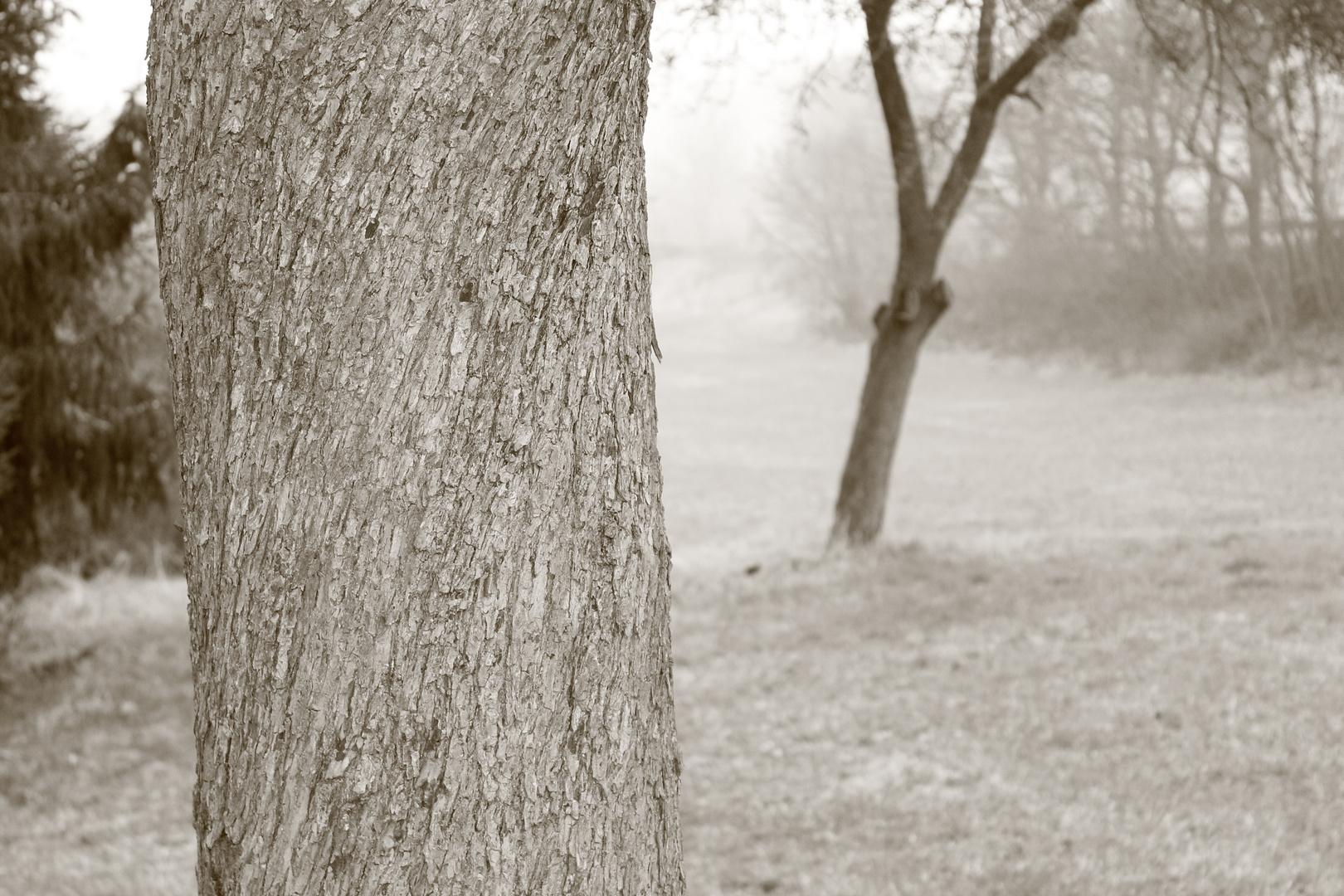 Wiesen-Baum