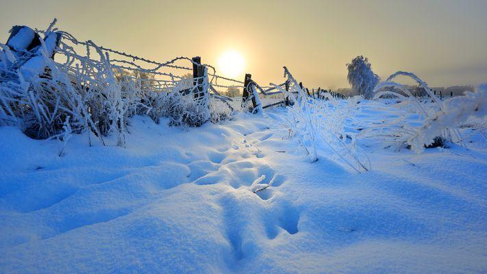 Wiesen bei Greifswald im Winter