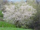 Wiesen-Frühling