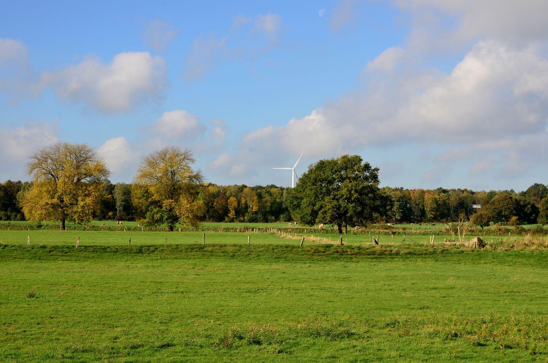Wiesen und Weiden im Herbstlicht 2
