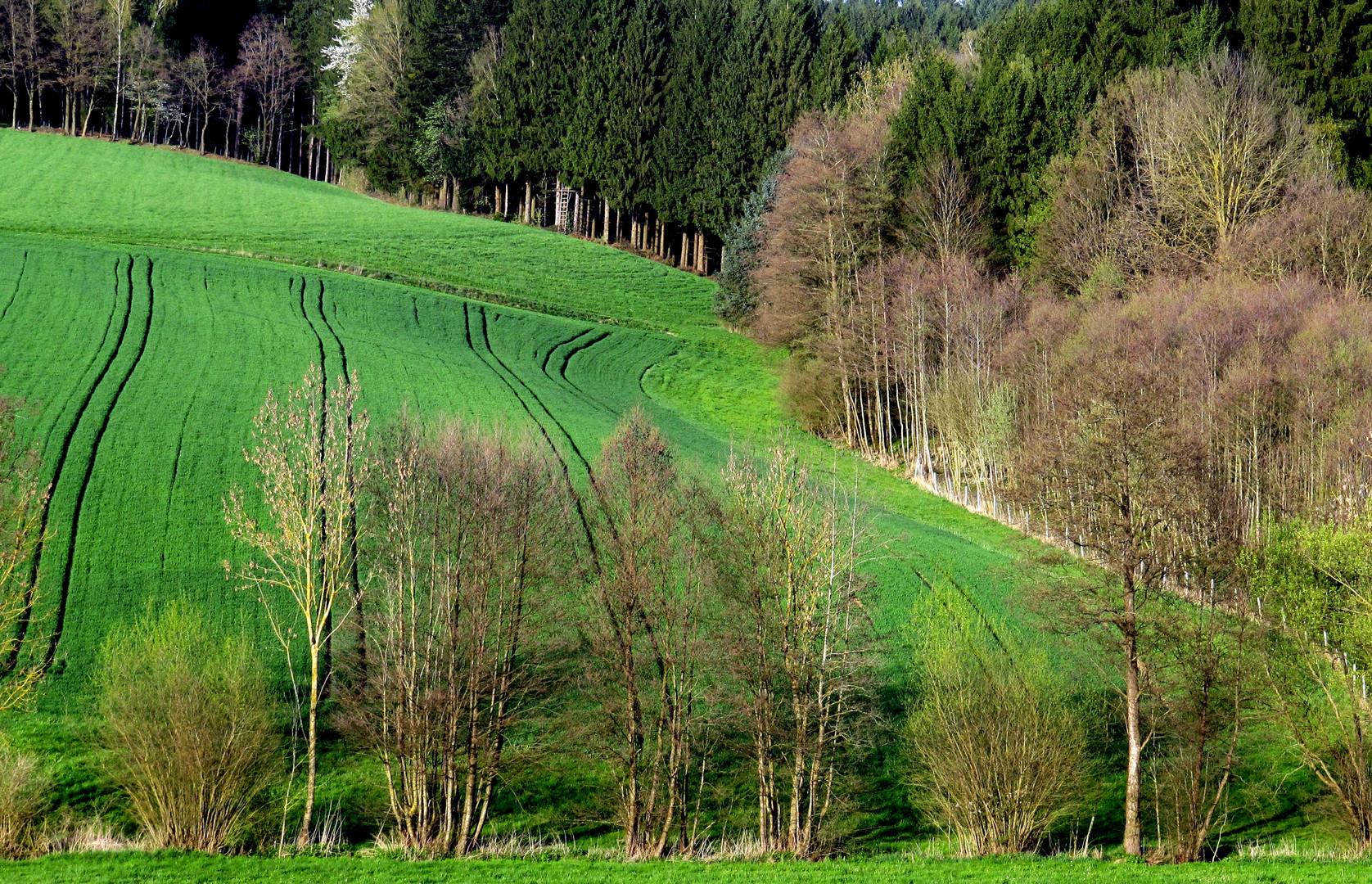 Wiesen, Wälder und Felder