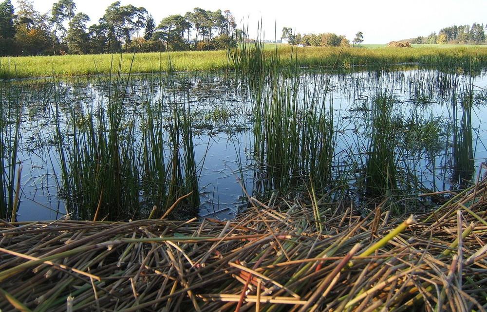 Wiesen-Wasser-Wunder-Welt