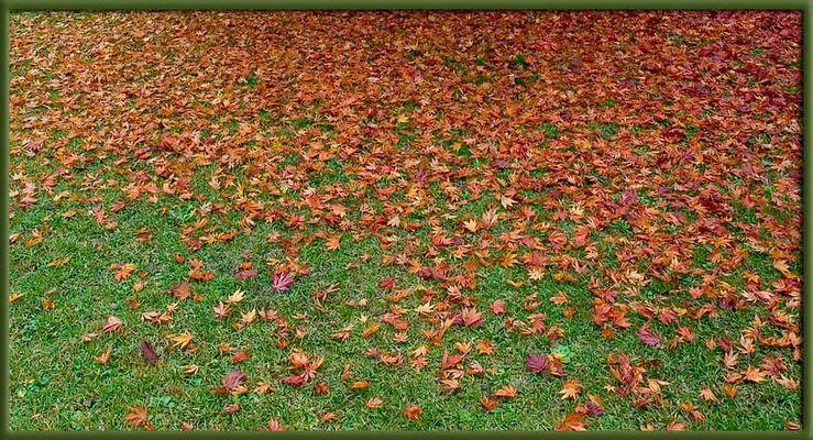 Wiesenblätter