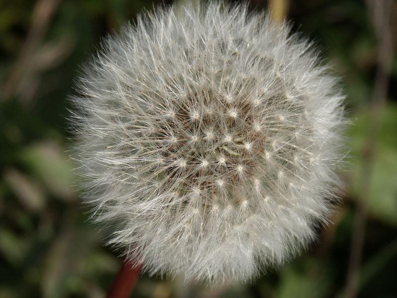 Wiesenblumen 1