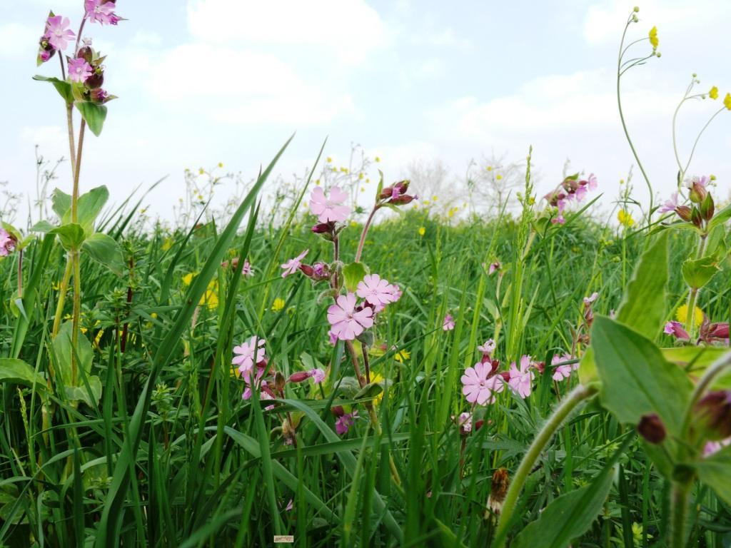 Wiesenblumen-Zeit