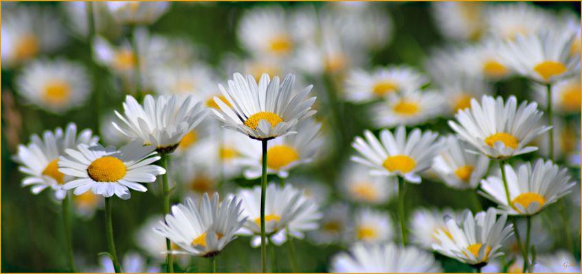 Wiesenblumen zum Wochenende