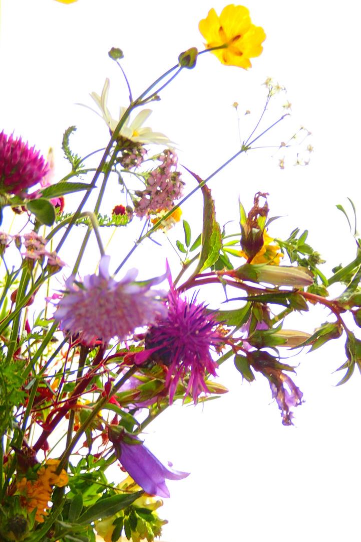 Wiesenblumenstrauss