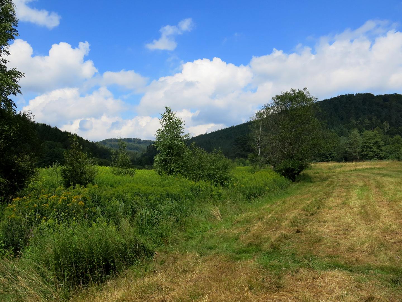 Wiesenlandschaft im Pfälzer Wald