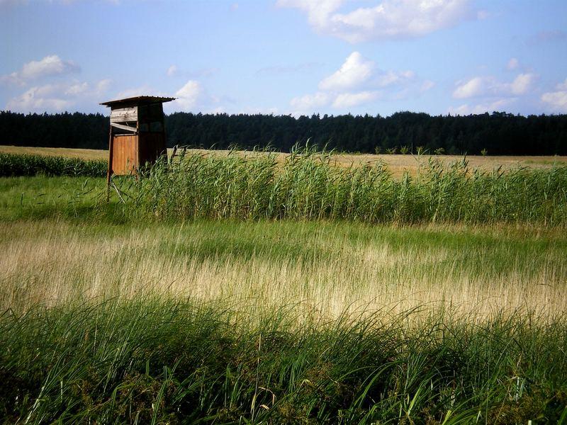 Wiesenmeer