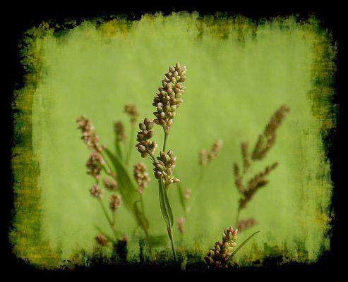 Wiesenpflanzen