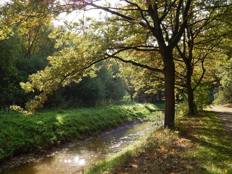 Wietze in der Herbstmittagssonne