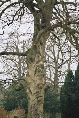 Wieviele Gesichter hat ein Baum ??