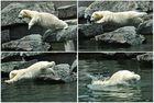 Wilbär geht schwimmen
