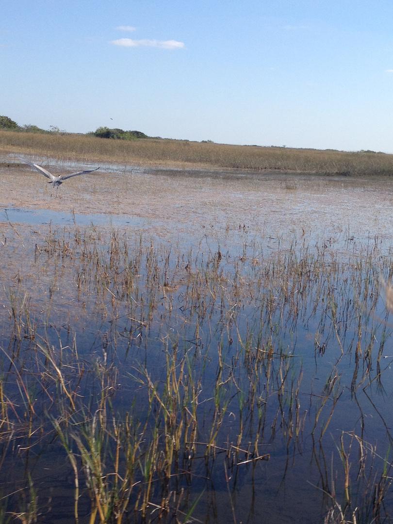 Wild area - Everglades