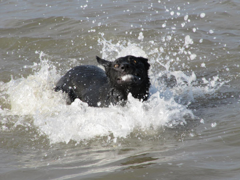 Wild aufs Wasser