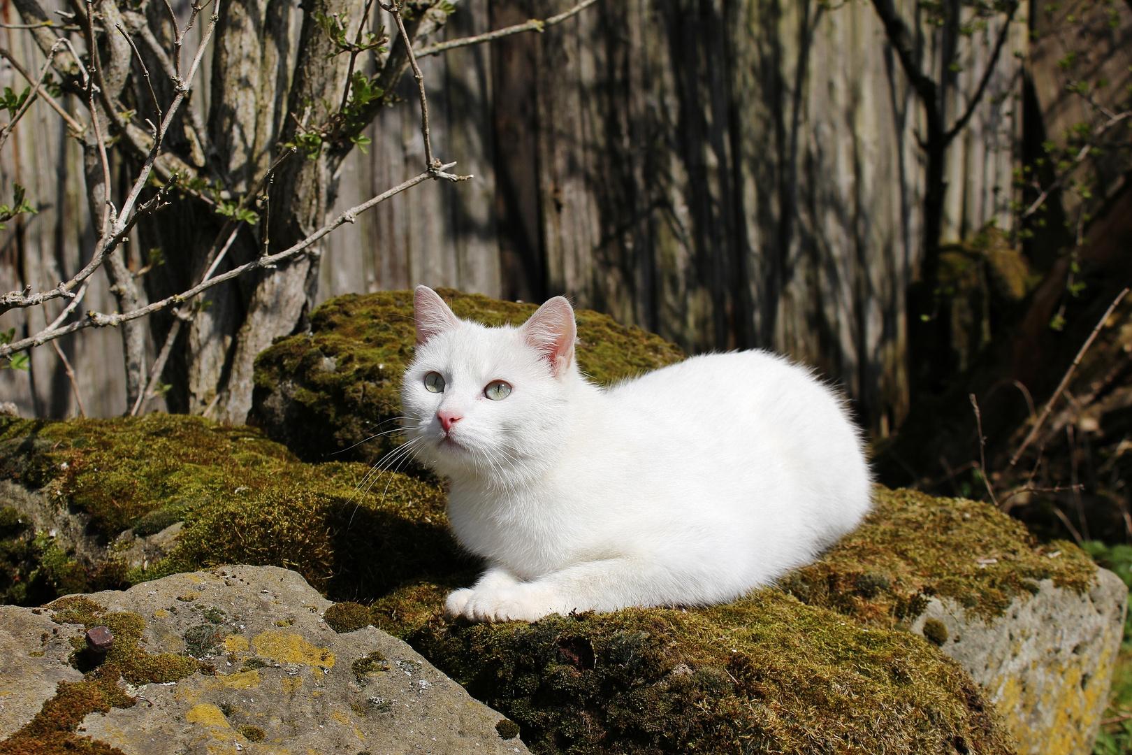 Wild Cat ganz lieb