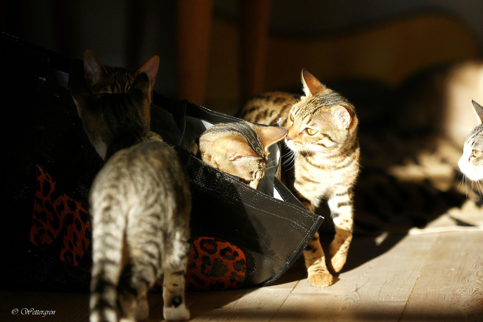 Wild Cats :)
