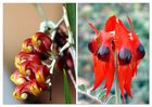 Wild Flowers From The North & Quick Message From Broome. Travel Story within.