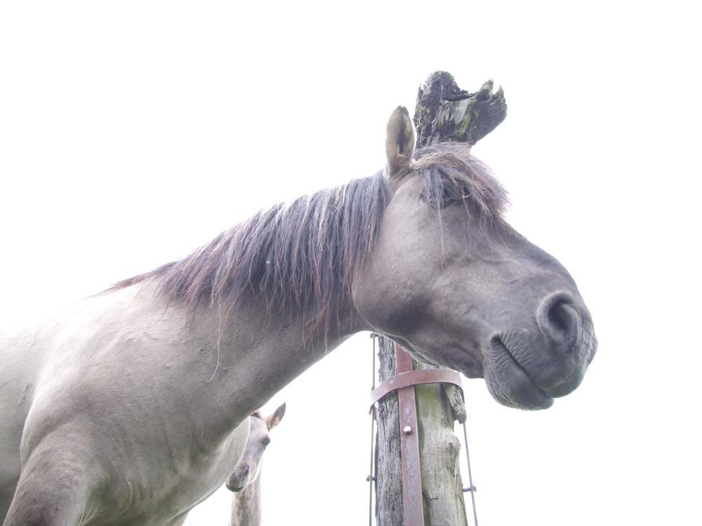 wild horse looking