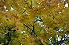 Wild Leaves