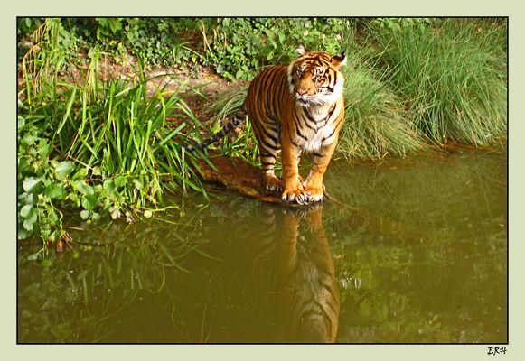 Wild life im Zoo