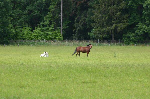 """""""Wild""""-Pferde"""