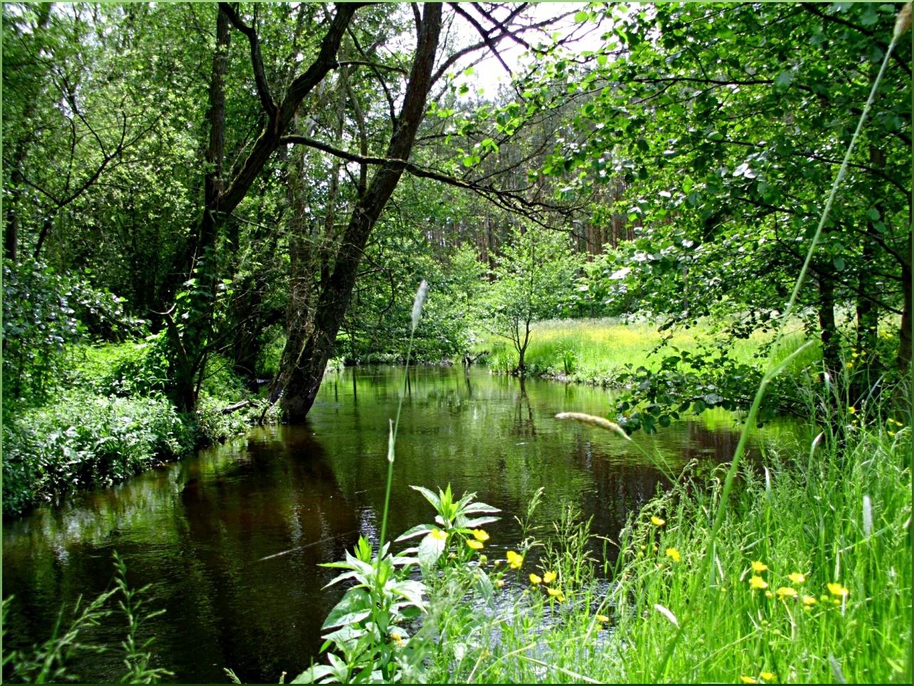 Wild river Mysla