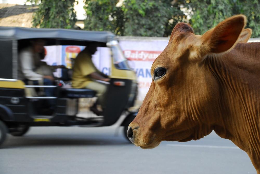 Wild streets of Mysore...