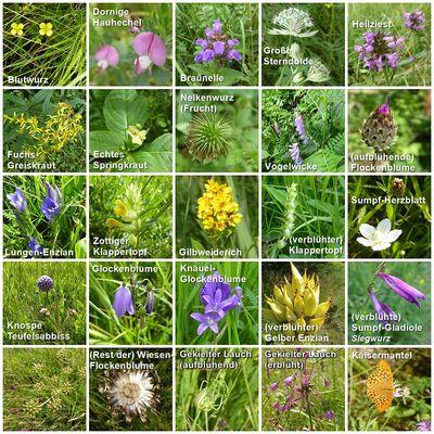 Wild- und Wiesenpflanzen